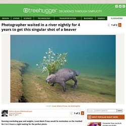 Photographer waited in a river nightly for 4 years to get this singular shot of a beaver : TreeHugger