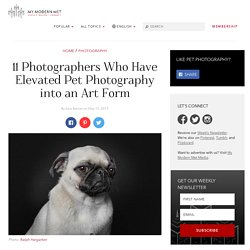 How Photographers Have Elevated Pet Photography Into an Art Form