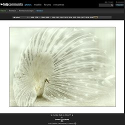 la mariée était en blanc!!! - Image de Nature - Photographie (17817288)