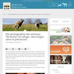 """Elle photographie des animaux """"de ferme"""" en refuge : des images rares et précieuses"""