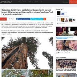 Cet arbre de 3200 ans est tellement grand qu'il n'avait jamais été photographié en entier... Jusqu'à aujourd'hui ! Vraiment surréaliste...