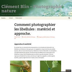 Comment photographier les libellules : matériel et approche. - Clément Blin - Photographie nature