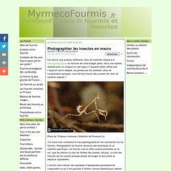 Photographier les insectes en macro - MyrmecoFourmis.fr fourmis et insectes
