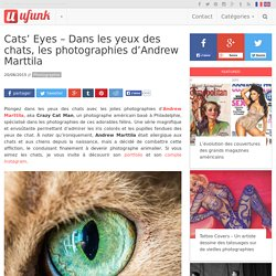 Cats' Eyes – Dans les yeux des chats, les photographies d'Andrew Marttila