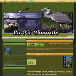 Plantes sauvages dans l'assiette 1 - La Pie Bavarde photographies et textes sur l'ornithologie et la nature