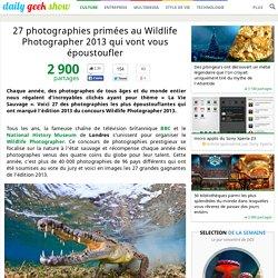 27 photographies primées au Wildlife Photographer 2013 qui vont vous époustoufler