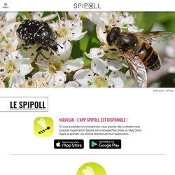 - Suivi photographique des insectes pollinisateurs