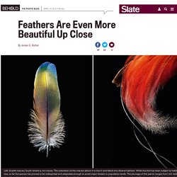 Robert Clark photographs feathers in his book Feathers: Displays of Brilliant Plumage.