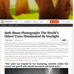 Beth Moon Photographs The World's Oldest Trees Illuminated By Starlight