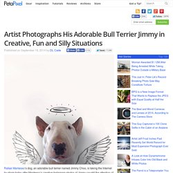 Artist Photographs His Adorable Bull Terrier Jimmy in Creative, Fun and Silly Situations