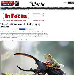 The 2014 Sony World Photography Awards - In Focus