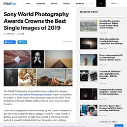 Sony World Photography Awards Crowns the Best Single Images of 2019
