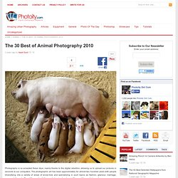 The 30 Best of Animal Photography 2010