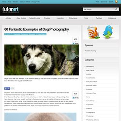 60 Examples of Dog Photography