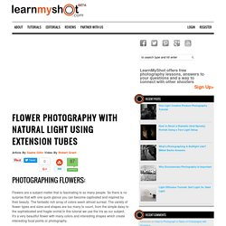 Flower Photography with Natural Light using Extension Tubes