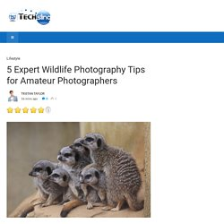 5 Expert Wildlife Photography Tips for Amateur Photographers