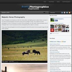 Majestic Horse Photography