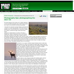 Wildlife Extra - Wildlife Photography - Photography tips: photographing the deer rut
