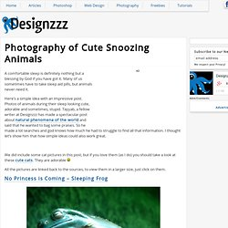 Photography of Cute Snoozing Animals