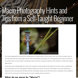 Macro Photography Hints and Tips from a Self-Taught Beginner
