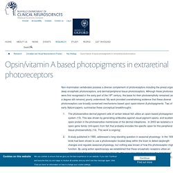 Opsin/vitamin A based photopigments in extraretinal photoreceptors — Nuffield Department of Clinical Neurosciences