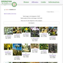 Photos of South African Plants - Category: GENERA G-H