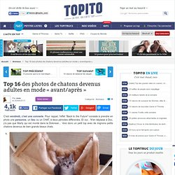 Top 12 des photos de chatons devenus adultes en mode « avant/après »