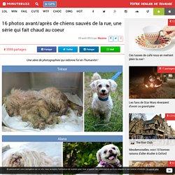 16 photos avant/après de chiens sauvés de la rue, une série qui fait chaud au coeur