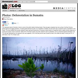 Captured: Deforestation in Sumatra – Plog Photo Blog