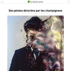 Des photos dévorées par les champignons
