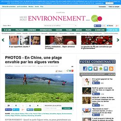 HUFFINGTON POST 05/07/13 PHOTOS - En Chine, une plage envahie par les algues vertes