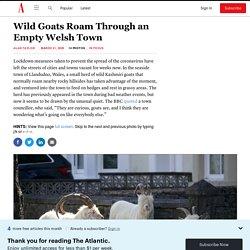 Photos: Wild Goats Roam Through an Empty Welsh Town
