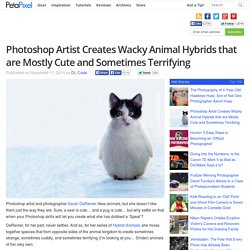 Photoshop Artist Creates Wacky Animal Hybrids that are Mostly Cute and Sometimes Terrifying