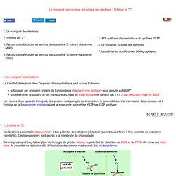 Transfert non cyclique electron schema z photosynthese photosynthesis Enseignement et recherche Biochimie Emmanuel Jaspard Universite Angers