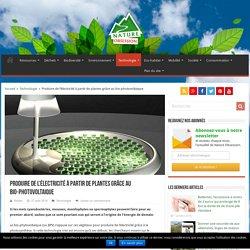 Le bio-photovoltaïque, produire de l'électricité avec les plantes