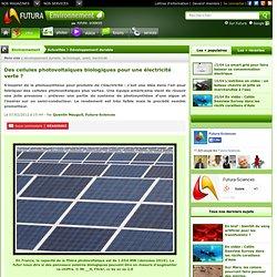 Des cellules photovoltaïques biologiques pour une électricité verte ?