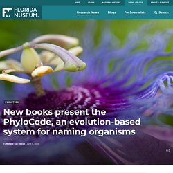 New books present the PhyloCode, an evolution-based system for naming organisms – Florida Museum Science