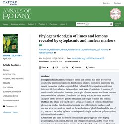 Phylogenetic origin of limes and lemons revealed by cytoplasmic and nuclear markers