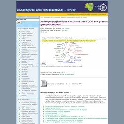 Arbre phylogénétique circulaire: de LUCA aux grands groupes actuels