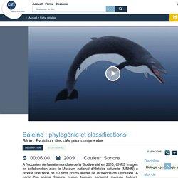 Baleine : phylogénie et classifications