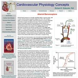 CV Physiology: Arterial Baroreceptors