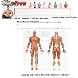 Anatomy and Physiology Functional Kinesiology Muscle Photos anatomy diagram of human body