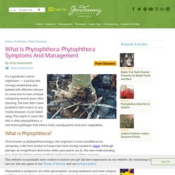 Phytophthora Fungus Information - Tips For Controlling Phytophthora Root Rot
