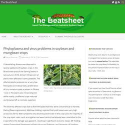 THE BEATSHEET 06/09/16 Phytoplasma and virus problems in soybean and mungbean crops