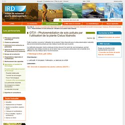 IRD - NOV 2010 - OT31 - Phytoremédiation de sols pollués par l'utilisation de la plante Cistus libanotis