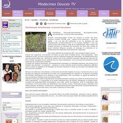 Phytothérapie, Aromathérapie: Le pouvoir des plantes