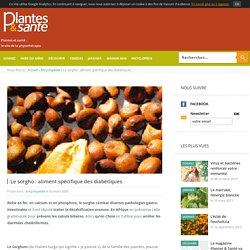 Plantes et santé - Magazine de la phytothérapie - Le sorgho : aliment spécifique des diabétiques