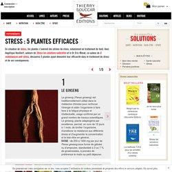 Phytothérapie Stress : 5 plantes efficaces