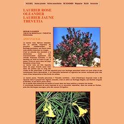 Le LAURIER ROSE ET LE LAURIER JAUNE THEVETIA, décoratifs mais toxiques, plantes médicinales, phytothérapie, insuffisance cardiaque, cancer