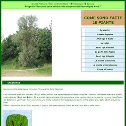 Le piante - Boschi di casa nostra - Alla scoperta del Parco Oglio Nord